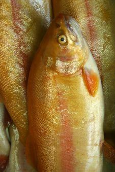 Free Fish Royalty Free Stock Photos - 1223738