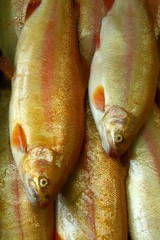 Free Fish Stock Photos - 1223763