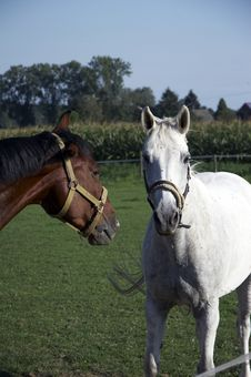 Free Horses 02 Royalty Free Stock Photography - 1224037
