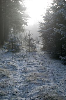 Foggy Path Stock Photo