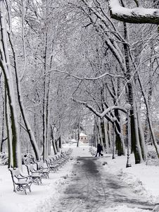 Free Park In Winter Stock Photos - 1225313