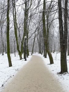 Free Winter In The Park Stock Photos - 1225353