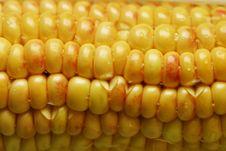 Free Wet Corn Stock Photos - 1227823