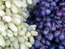 Two Different Grades Of Grapes Stock Photos