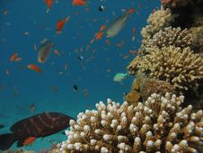 Free Coral Reef Scene Royalty Free Stock Images - 1228749