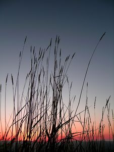 Grass Silhouette At Sunset Royalty Free Stock Image