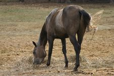 Free Horse Eating Hay Royalty Free Stock Images - 1229929