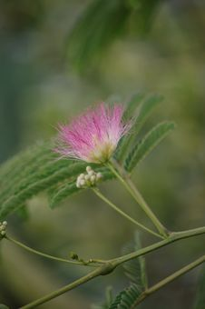 Free Flower, Plant, Flora, Thistle Royalty Free Stock Image - 122107426