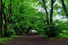 Free Vegetation, Tree, Woodland, Nature Royalty Free Stock Photos - 122107578