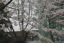 Free Plant, Blossom, Flower, Branch Stock Images - 122107634