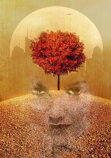 Free Autumn, Tree, Leaf, Still Life Photography Royalty Free Stock Image - 122107636