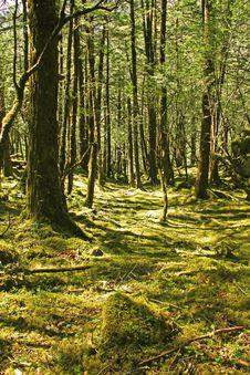 Free Woodland, Ecosystem, Forest, Nature Stock Photos - 122107843