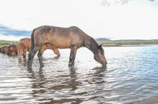 Free Horse Like Mammal, Horse, Wildlife, Mustang Horse Royalty Free Stock Photo - 122107875