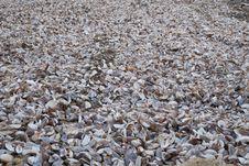 Free Gravel, Rubble, Pebble, Seashell Stock Photography - 122107912