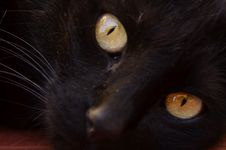 Free Cat, Black Cat, Whiskers, Black Royalty Free Stock Photo - 122107935