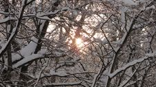 Free Branch, Winter, Tree, Sky Royalty Free Stock Photo - 122107945