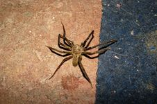 Free Spider, Arachnid, Invertebrate, Wolf Spider Royalty Free Stock Photo - 122108065
