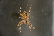 Free Spider, Arachnid, Orb Weaver Spider, Invertebrate Stock Image - 122108261