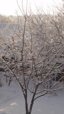 Free Snow, Branch, Winter, Tree Stock Image - 122108461