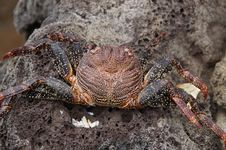 Free Crab, Freshwater Crab, Decapoda, Crustacean Stock Photo - 122203680