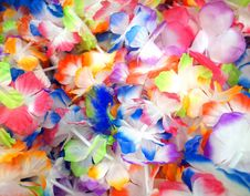 Free Flower, Petal, Flowering Plant, Lei Royalty Free Stock Photography - 122203767