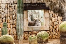 Free Cactus, Plant, Wall, Flowering Plant Stock Photos - 122203953