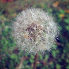 Free Flower, Flora, Dandelion, Plant Royalty Free Stock Photo - 122203955