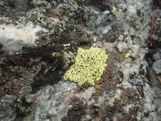 Free Rock, Soil, Organism, Non Vascular Land Plant Stock Photography - 122204372