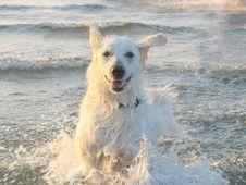 Free Dog, Dog Like Mammal, Dog Breed, Retriever Royalty Free Stock Photo - 122204415