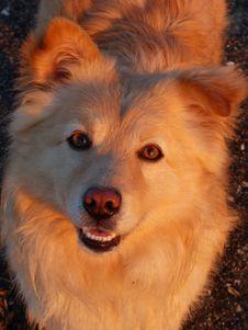 Free Dog, Dog Like Mammal, Dog Breed, Dog Breed Group Stock Photos - 122204503