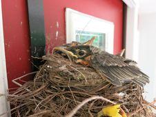 Free Bird Nest, Nest, Bird, Beak Stock Photo - 122204600