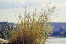 Free Plant, Grass, Grass Family, Sky Royalty Free Stock Photo - 122204615