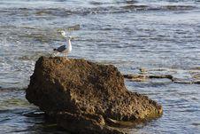 Free Bird, Fauna, Seabird, Sea Royalty Free Stock Photography - 122204827