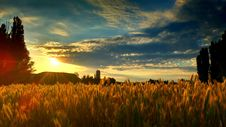 Free Sky, Field, Grass, Grass Family Stock Photography - 122205032