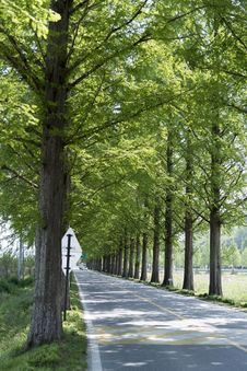 Free Tree, Nature, Path, Woody Plant Stock Photos - 122700953