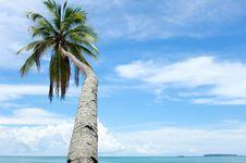 Free Sky, Tropics, Palm Tree, Arecales Stock Images - 122701004