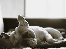 Free Dog, Dog Like Mammal, Dog Breed, Mammal Stock Photo - 122701030