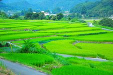Free Paddy Field, Grassland, Field, Agriculture Stock Photos - 122701033