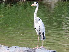 Free Bird, Stork, Fauna, Crane Like Bird Stock Photography - 122701122
