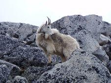 Free Mountain Goat, Mammal, Fauna, Goats Stock Photo - 122701290
