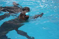 Free Water, Leisure, Swimming Pool, Swimming Stock Image - 122701361