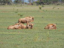 Free Wildlife, Grassland, Ecosystem, Savanna Stock Photos - 122828263