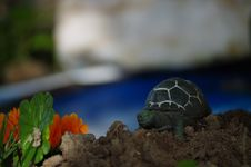 Free Tortoise, Turtle, Emydidae, Reptile Stock Image - 122828741