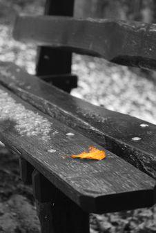 Free Leaf Orange On Black Bench Stock Photography - 12290292