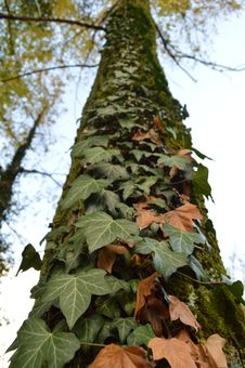 Free Leaf, Plant, Tree, Trunk Royalty Free Stock Images - 122924809