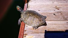 Free Turtle, Emydidae, Reptile, Fauna Royalty Free Stock Photography - 122924877