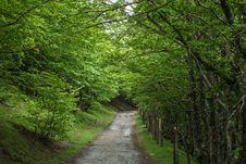 Free Vegetation, Woodland, Ecosystem, Nature Reserve Stock Photography - 122924932
