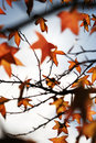 Free Autumn Leaves Stock Image - 1230571