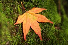 Free Autum Leaves Stock Photos - 1230553