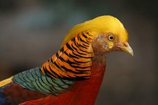 Free Colourful Bird Stock Photo - 1230590